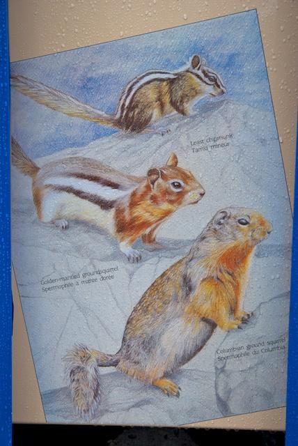 823. Squirrels