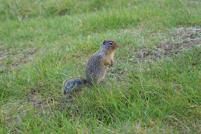 824. Squirrels