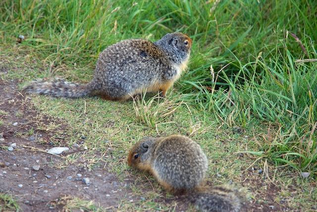 825. Squirrels
