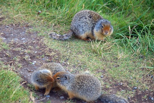 826. Squirrels