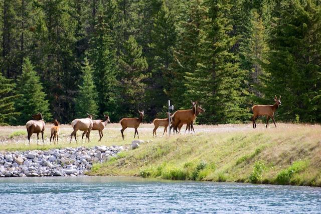 827. Elk