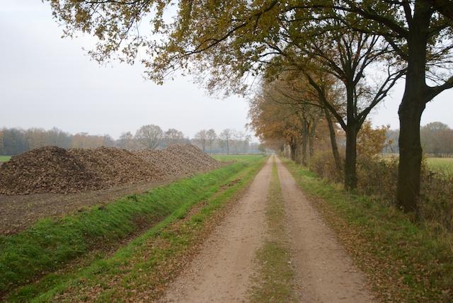 19. Grensweg