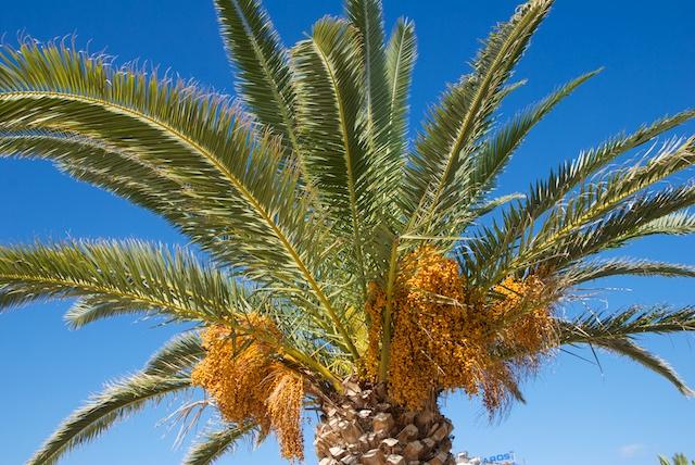 197. Palm