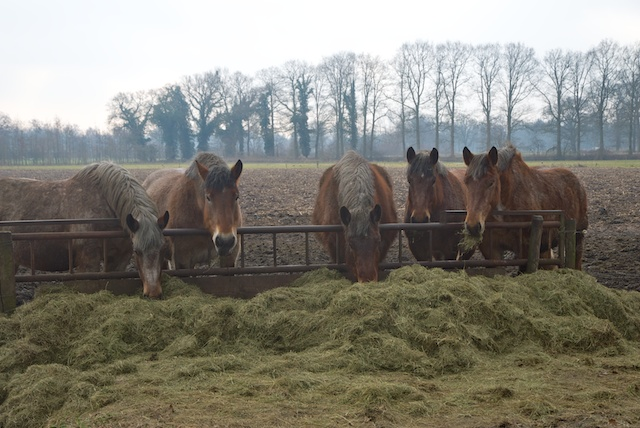 07. Paarden