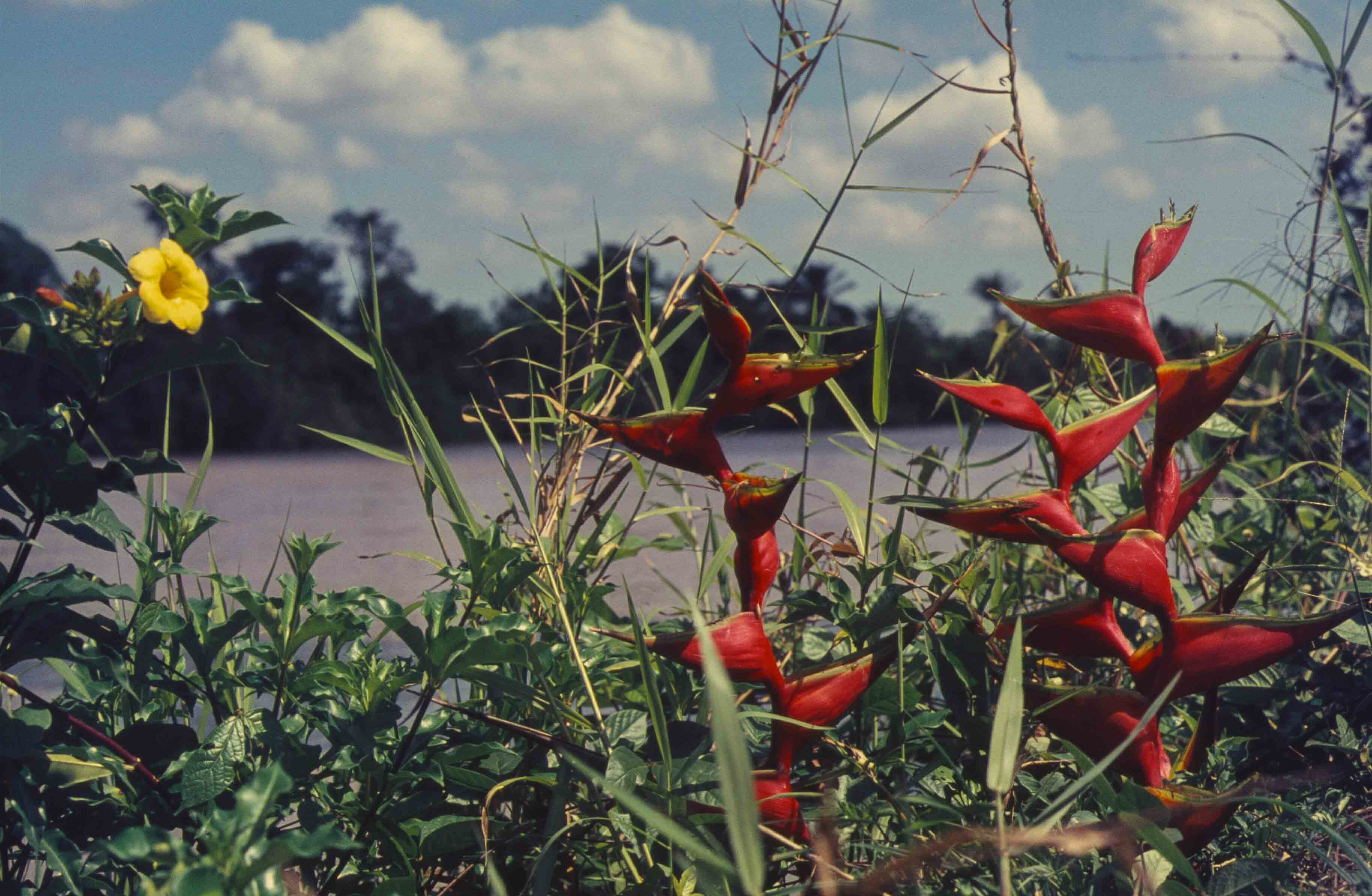 112. Suriname
