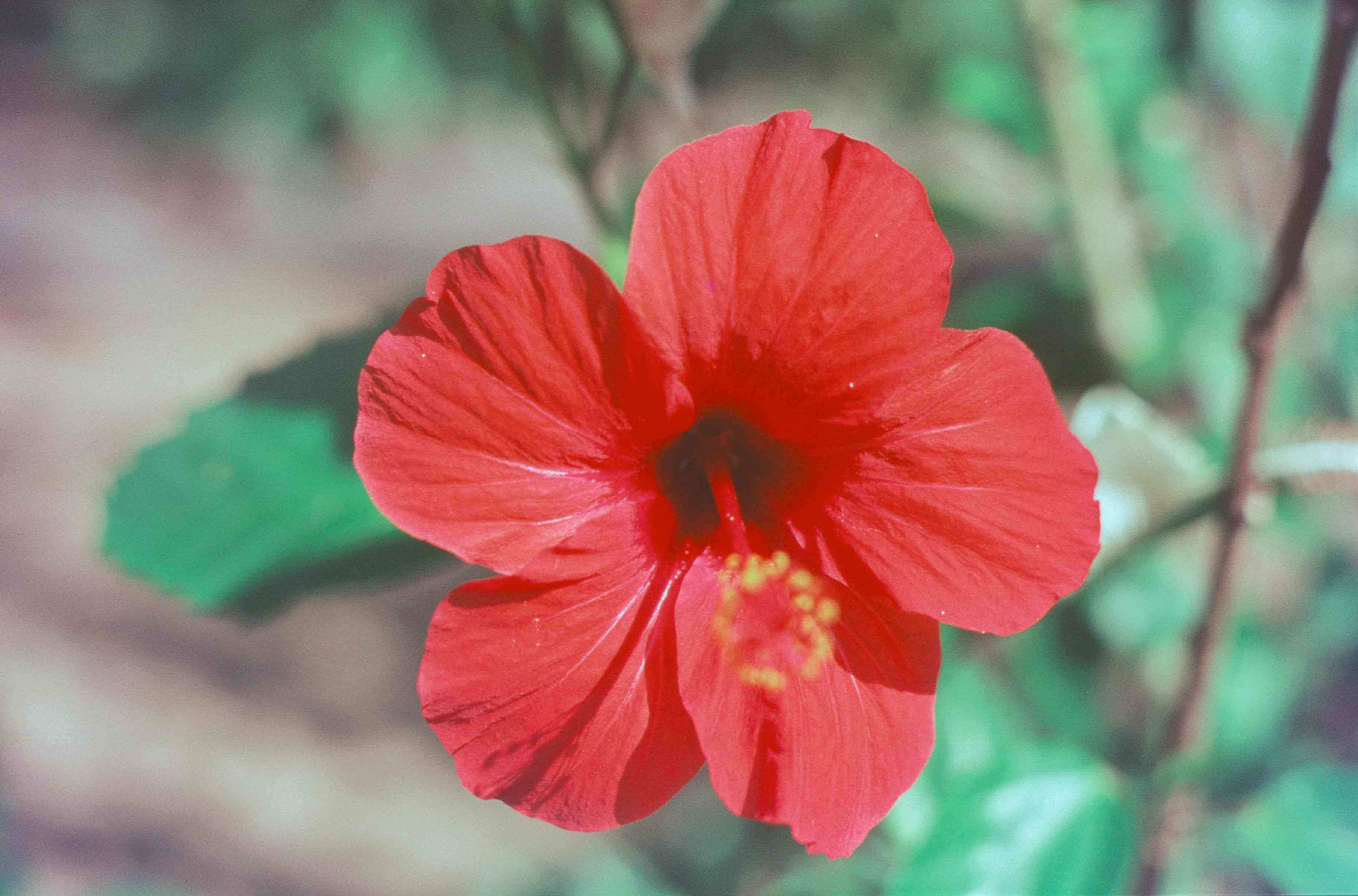 198. Suriname