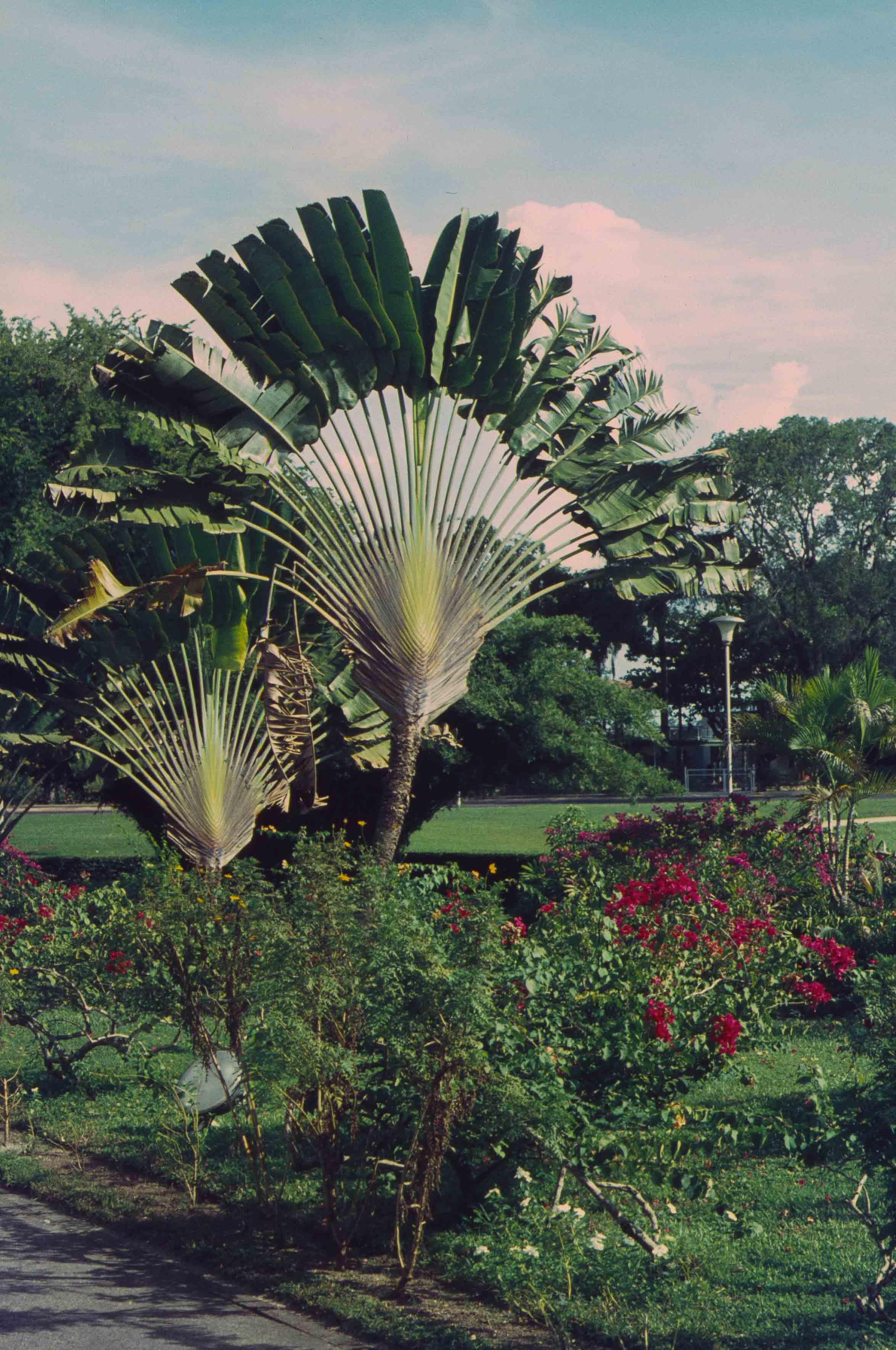 237. Suriname