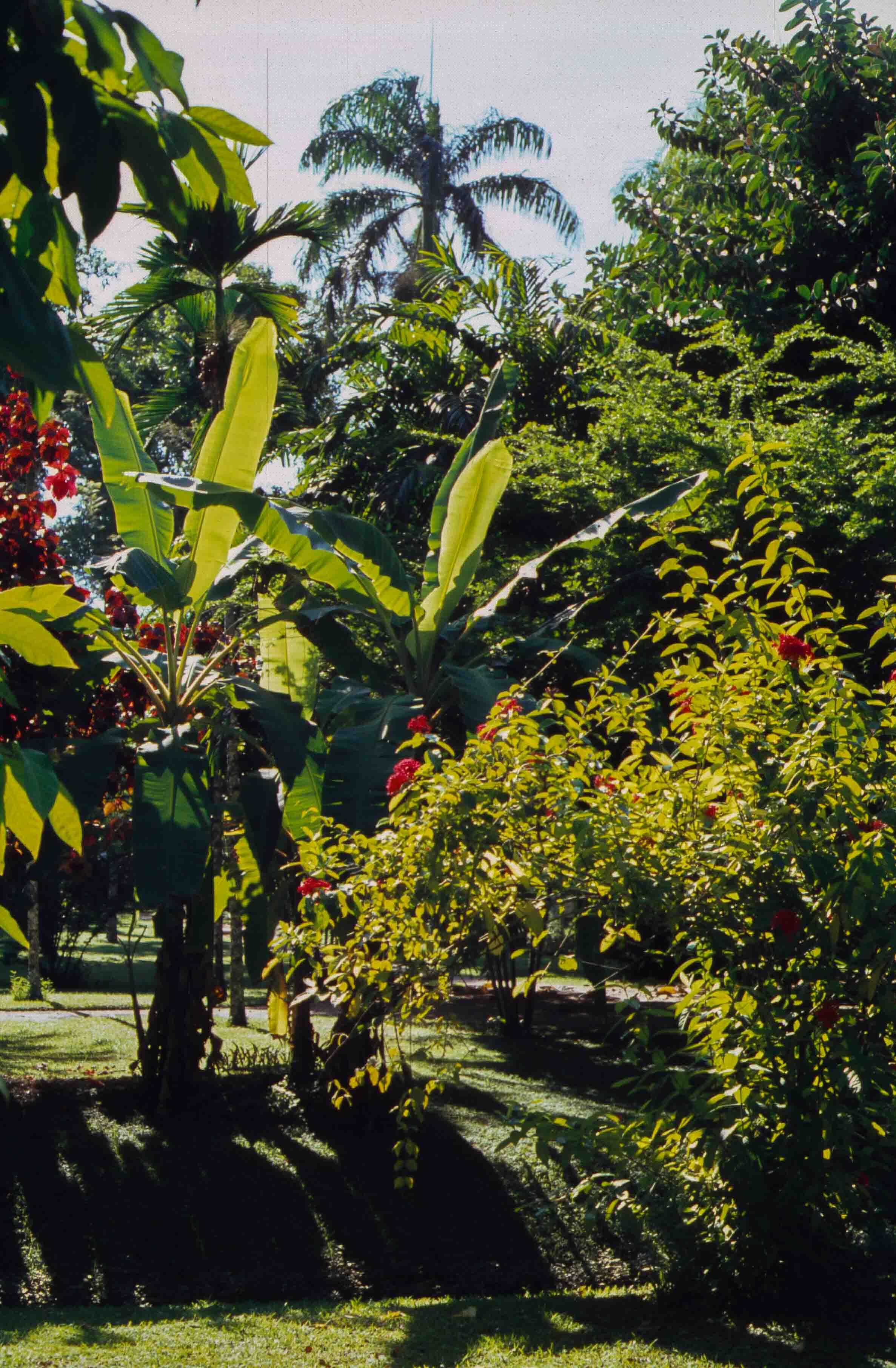 239. Suriname