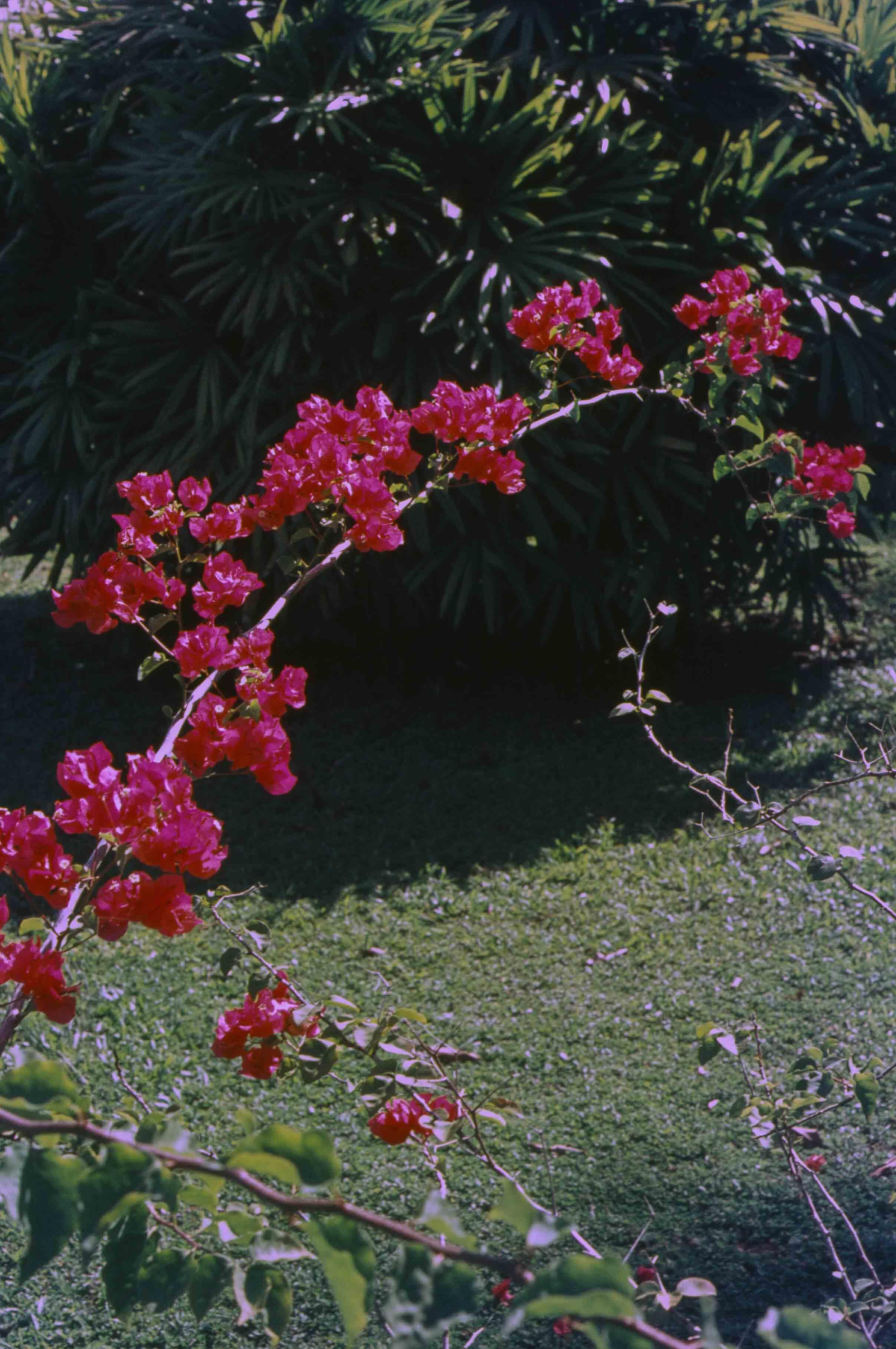 242. Suriname