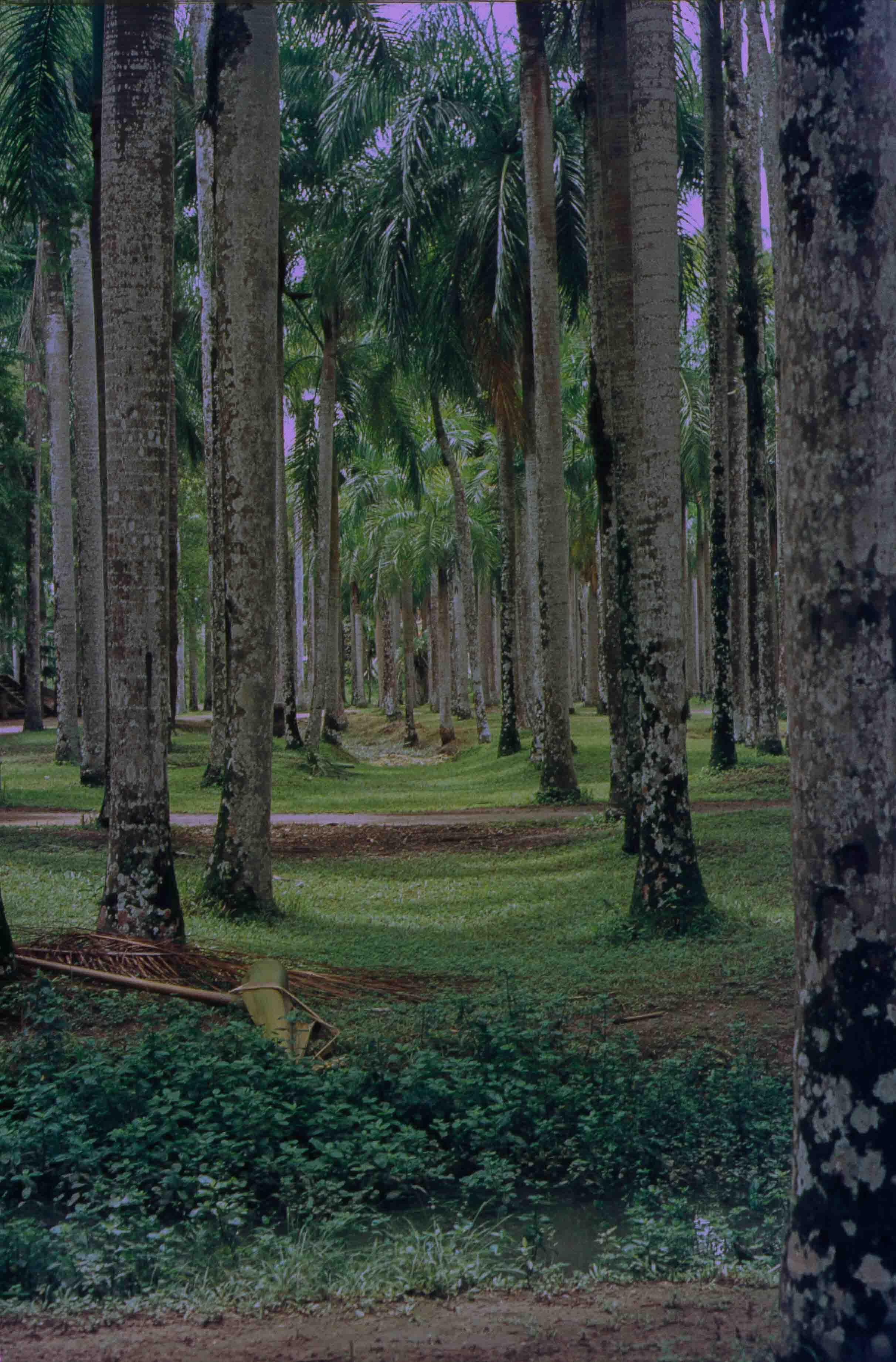 247. Suriname