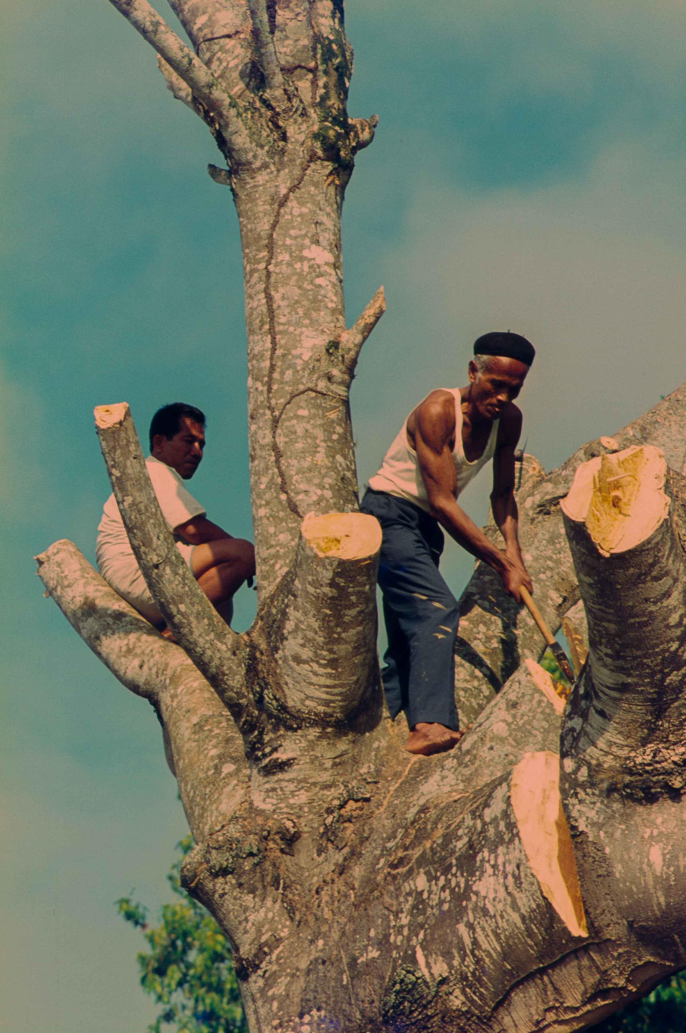 292. Suriname
