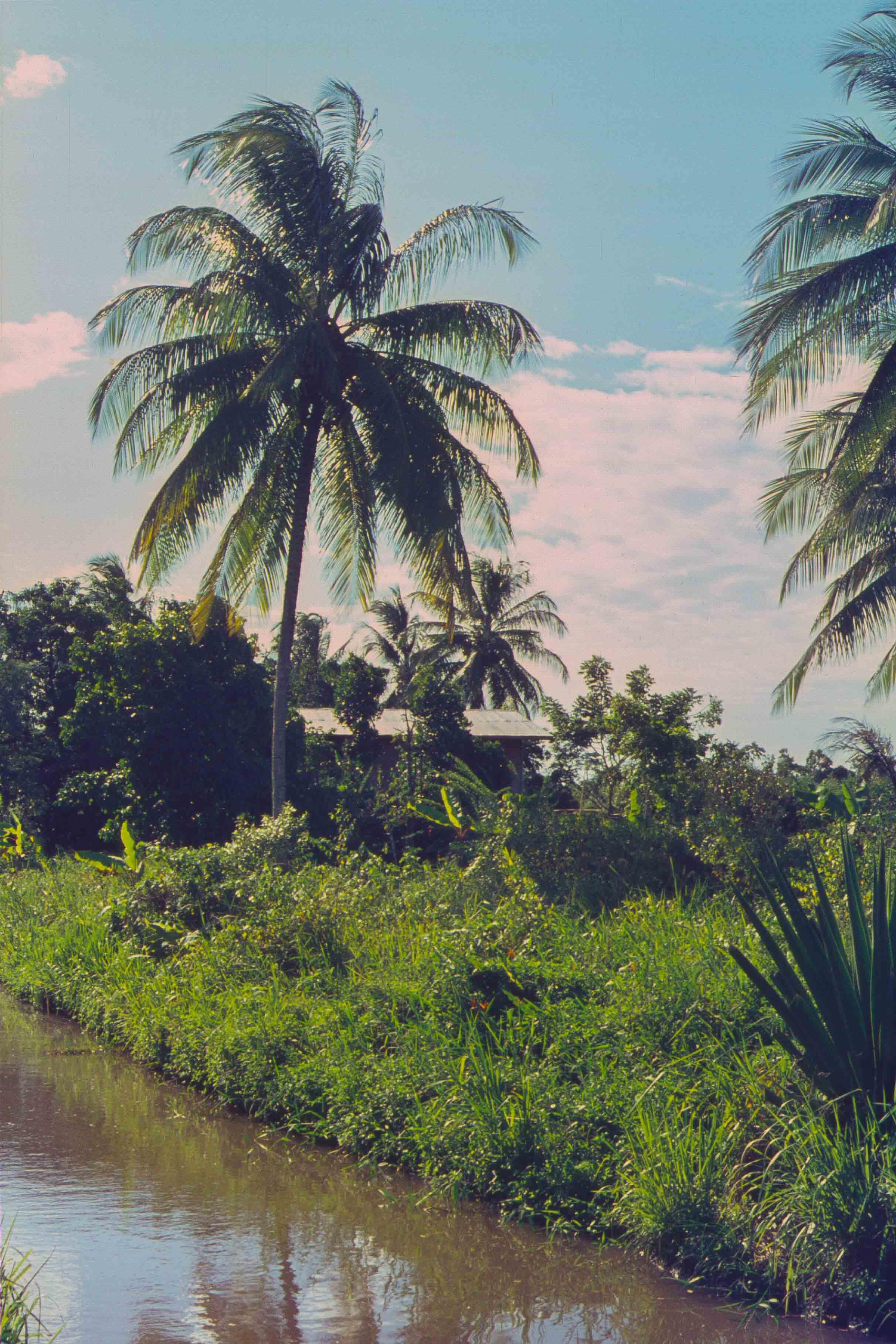 330. Suriname