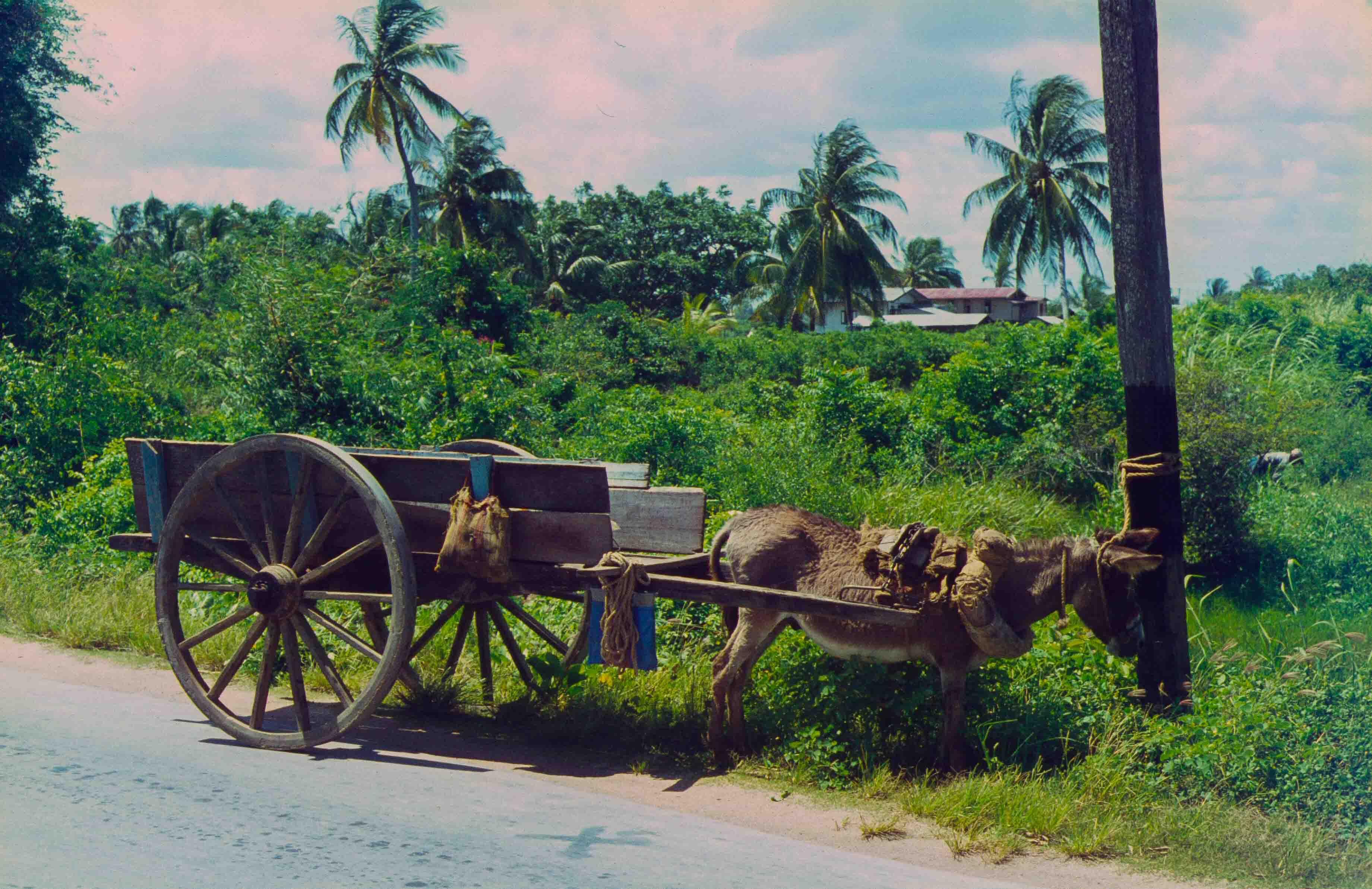 331. Suriname