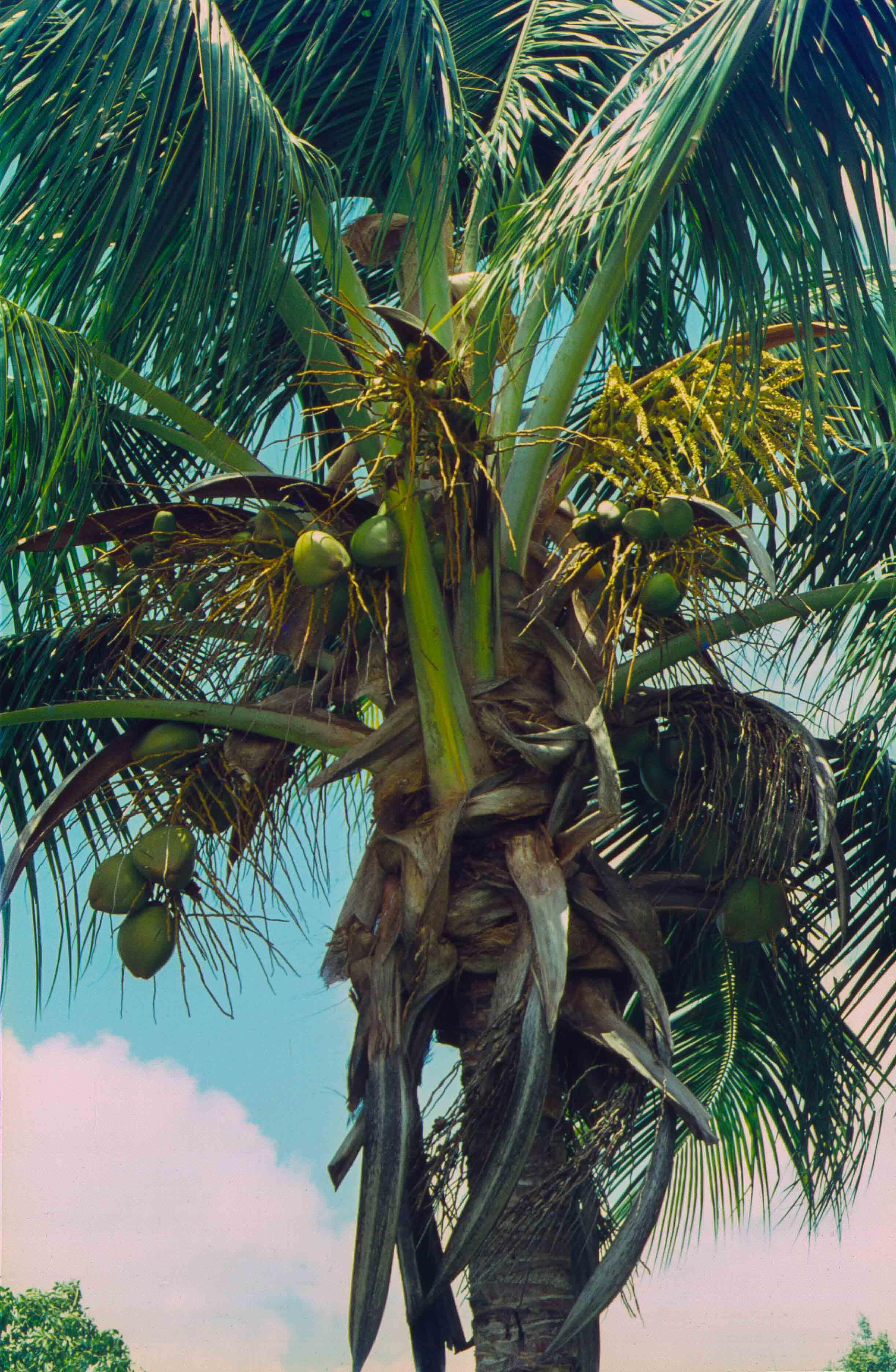 332. Suriname