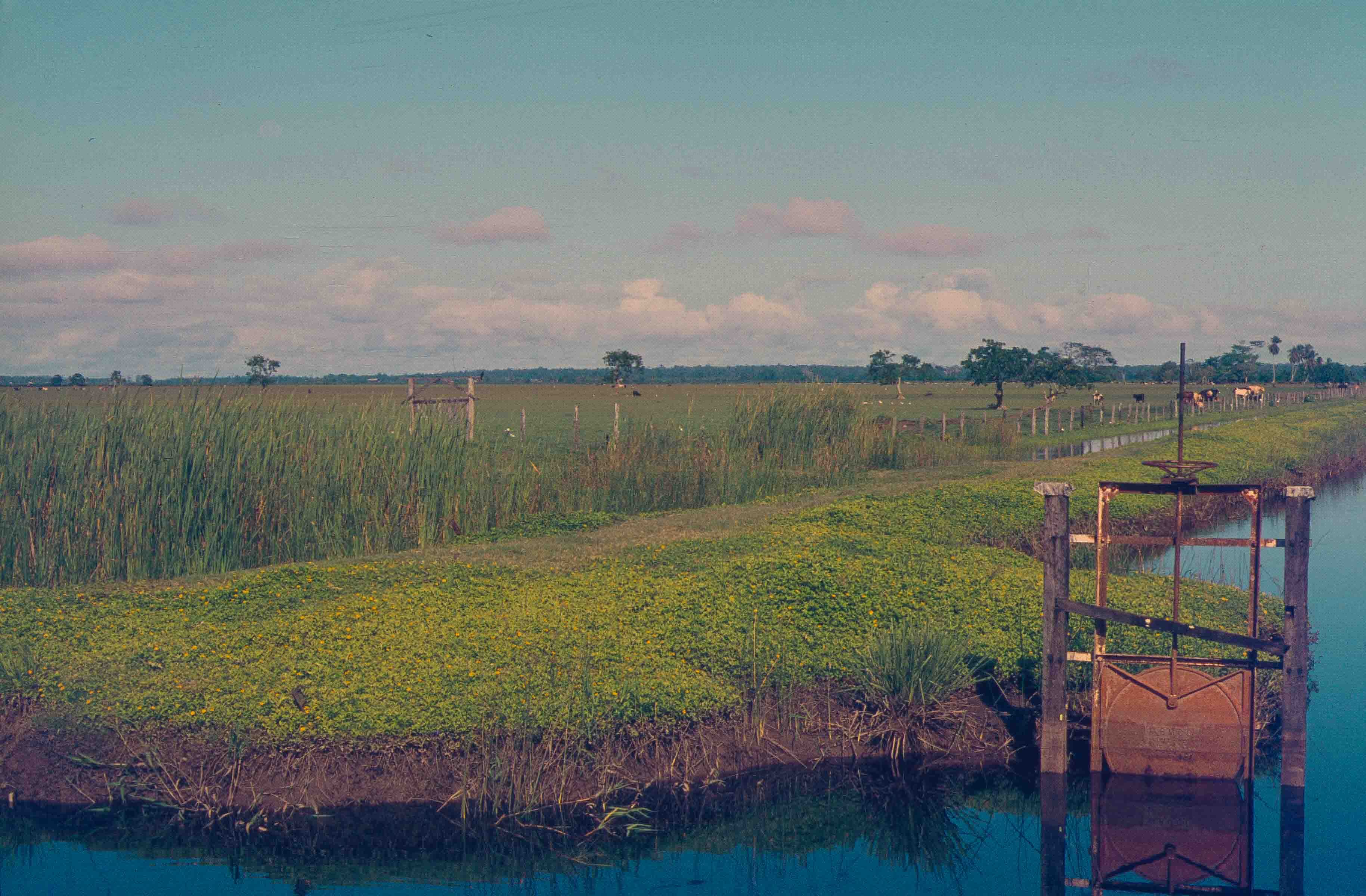 348. Suriname