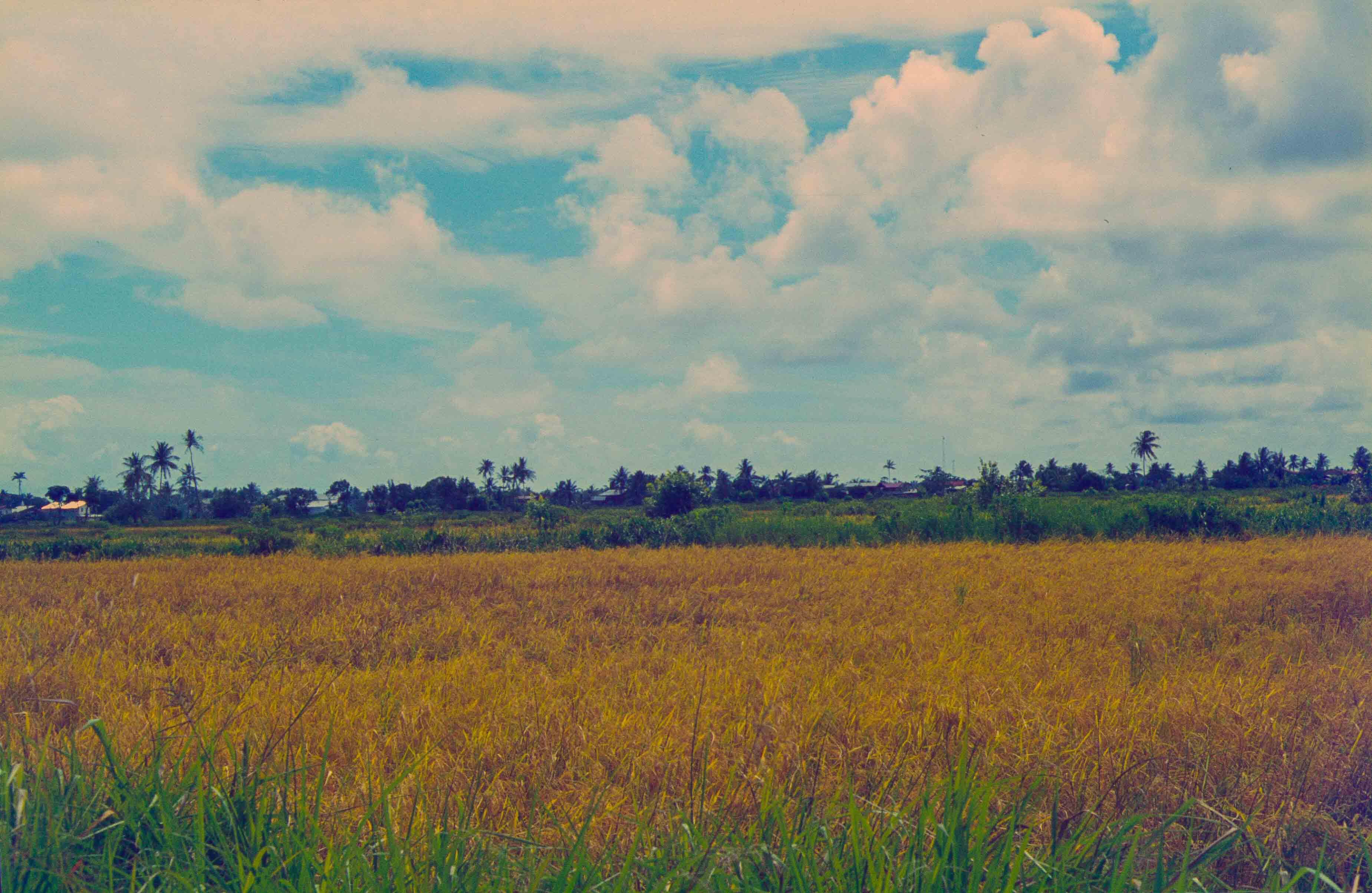 349. Suriname
