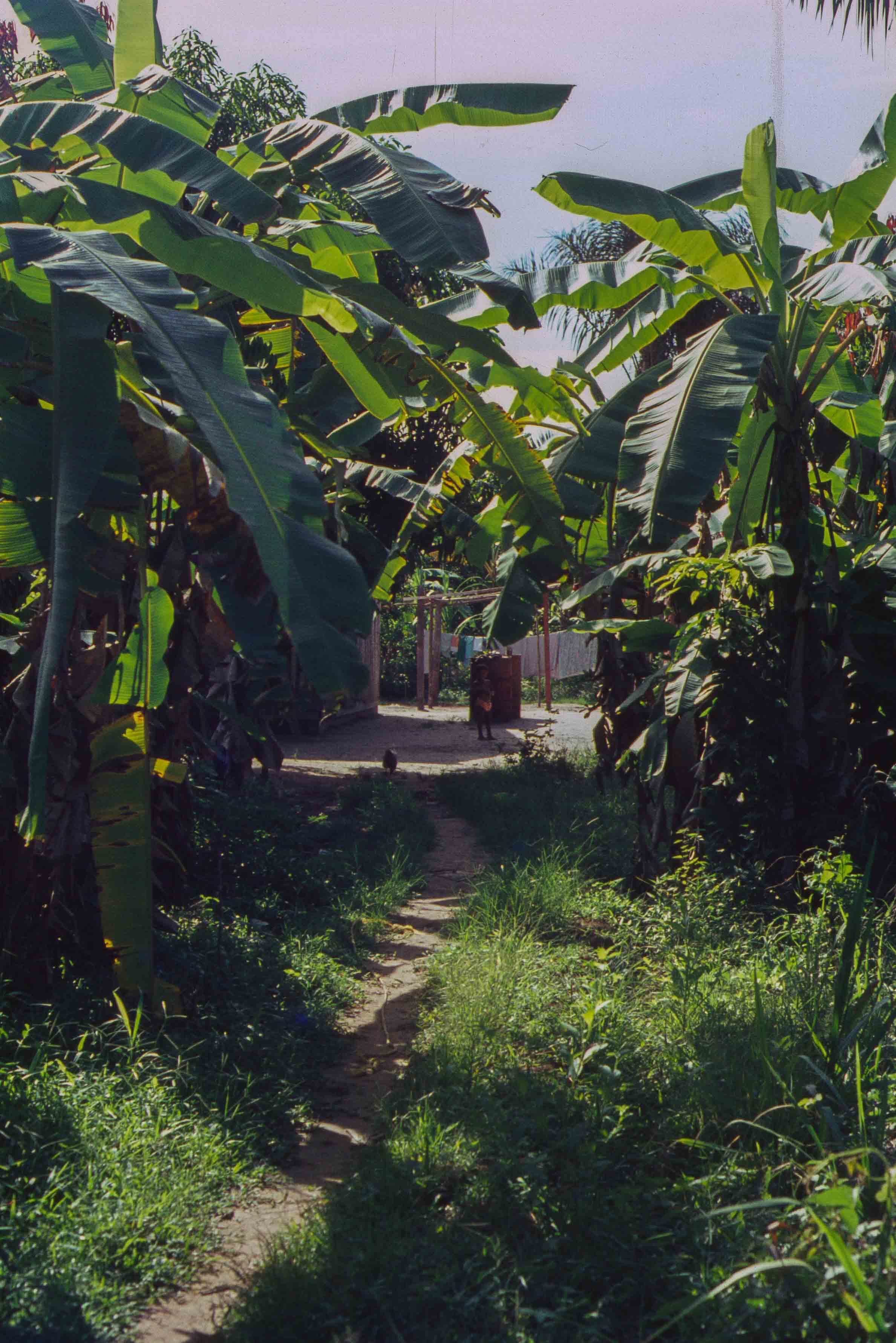 377. Suriname