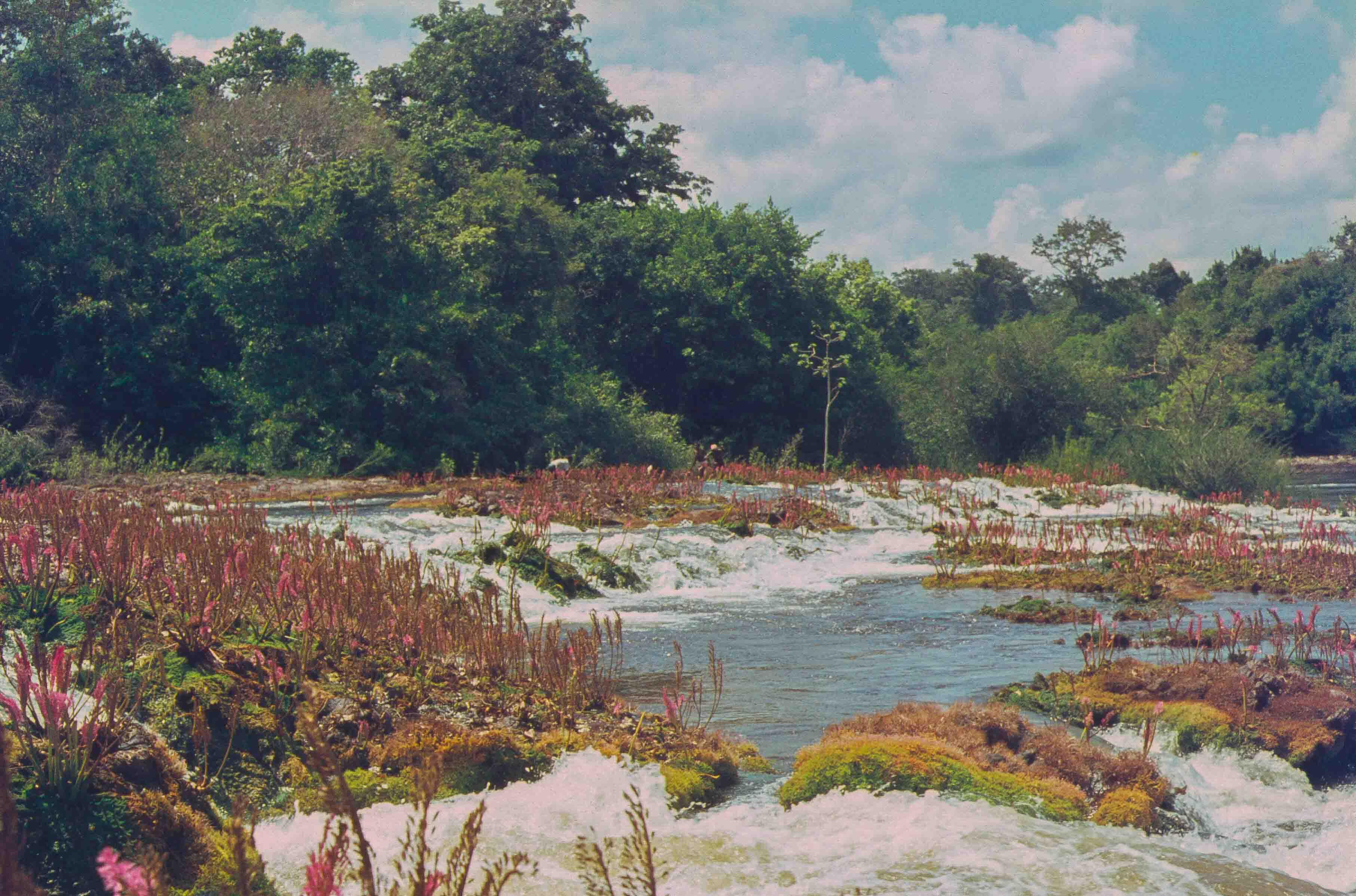469. Suriname