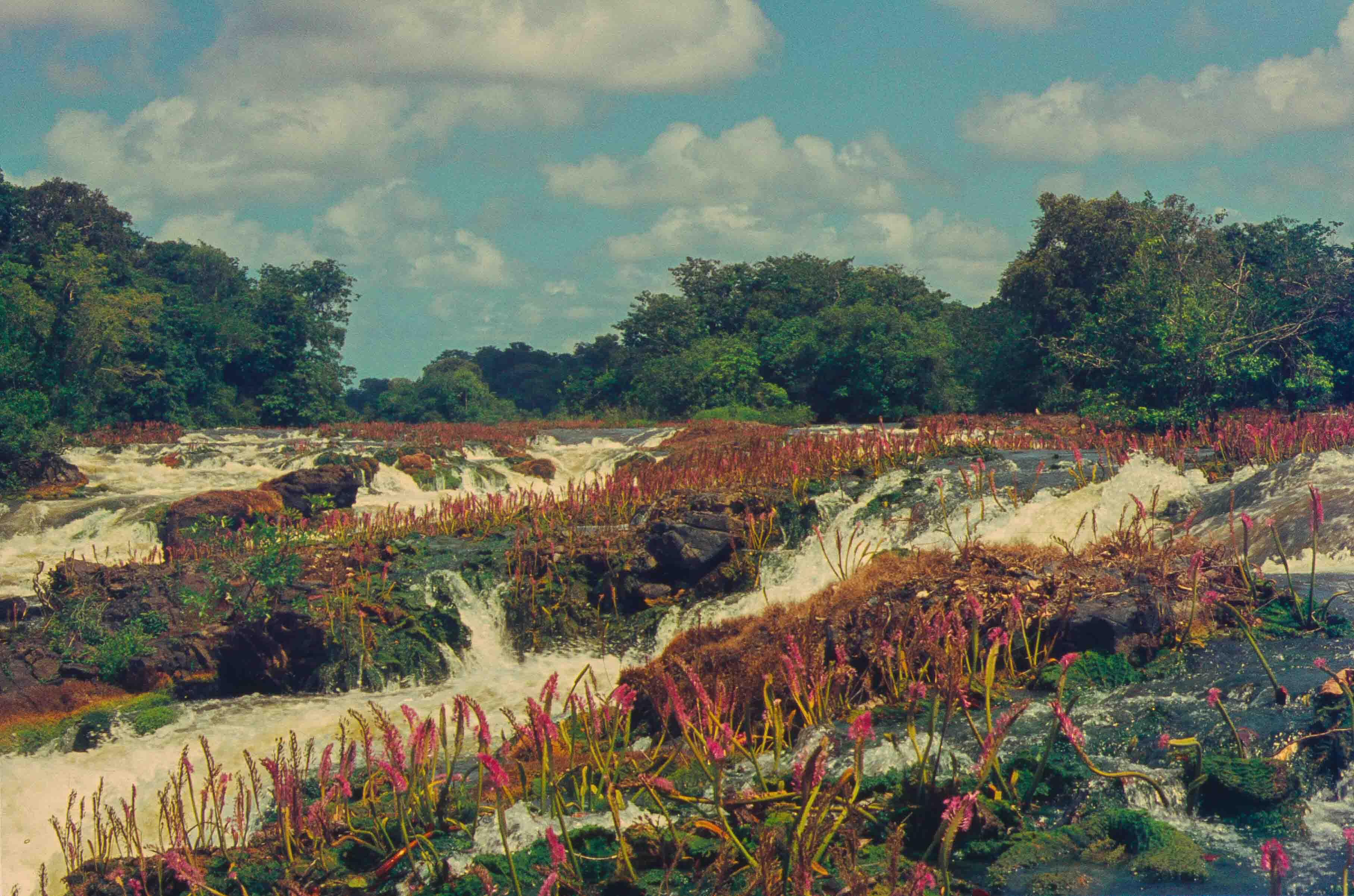 470. Suriname
