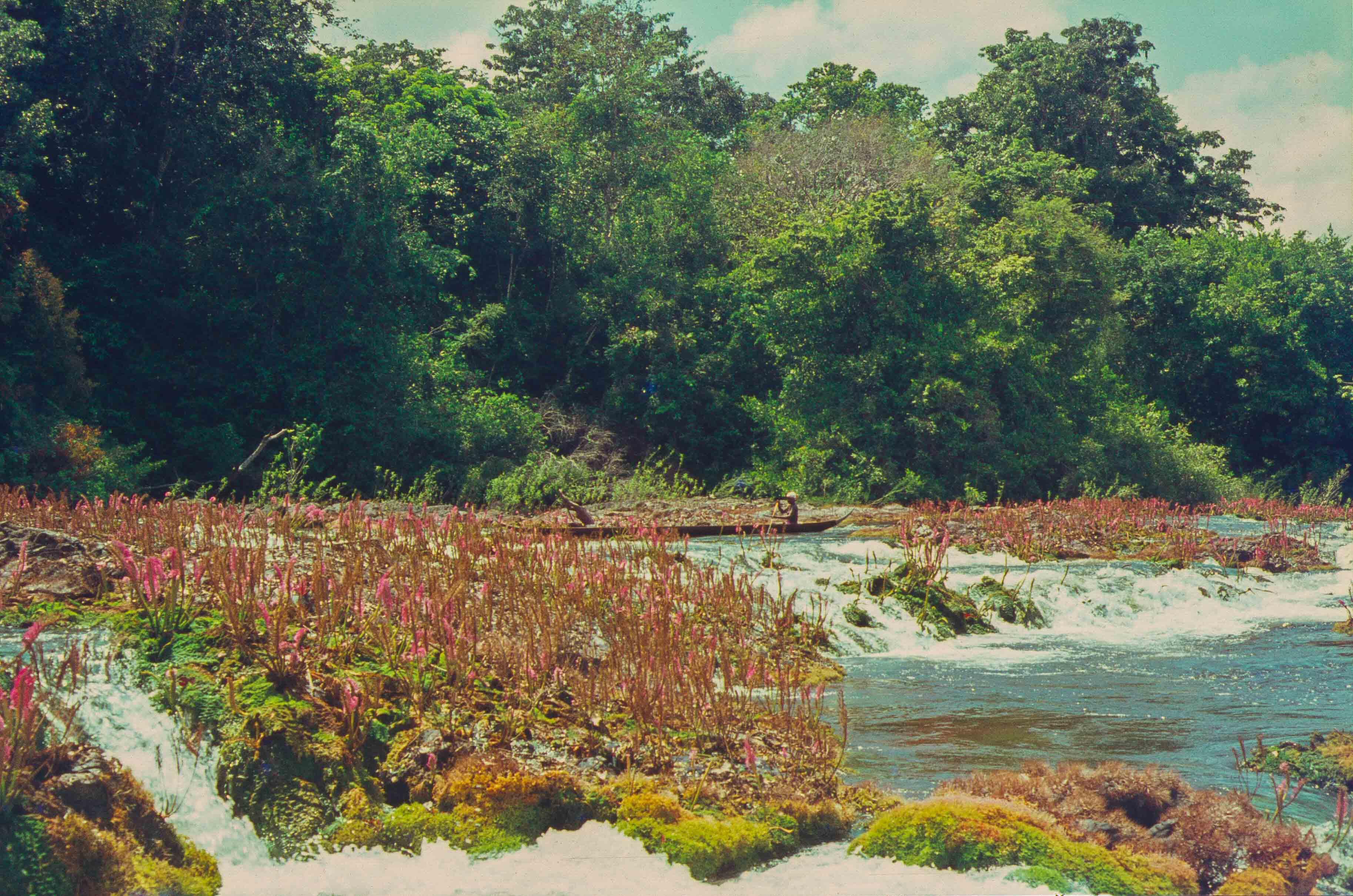 471. Suriname