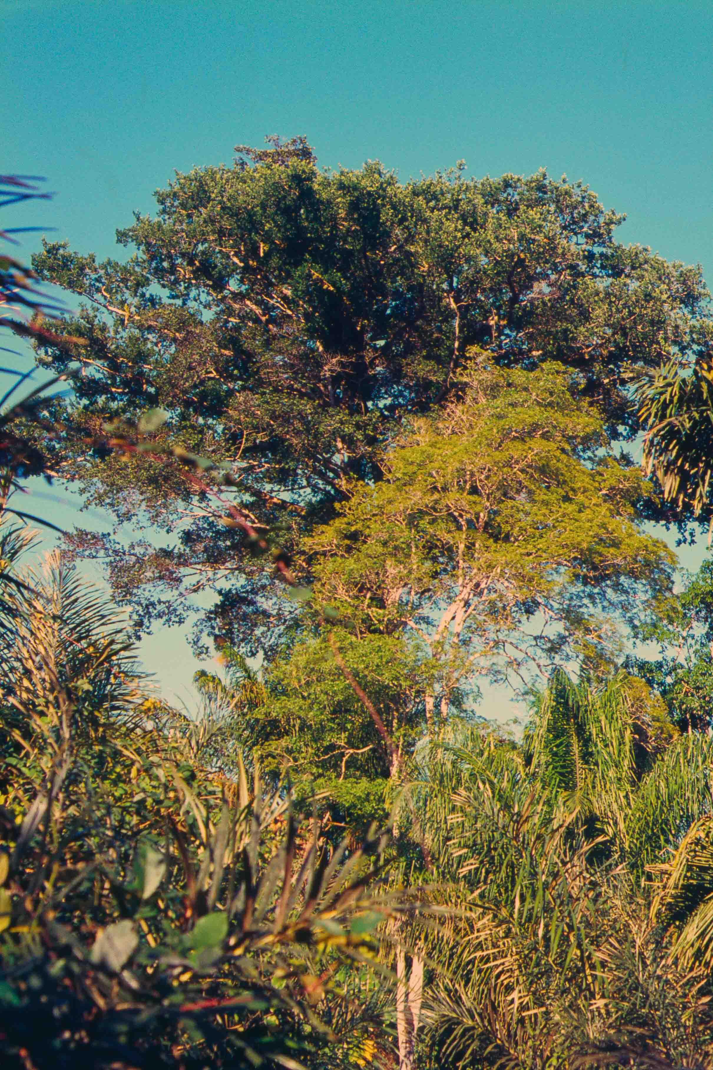 543. Suriname