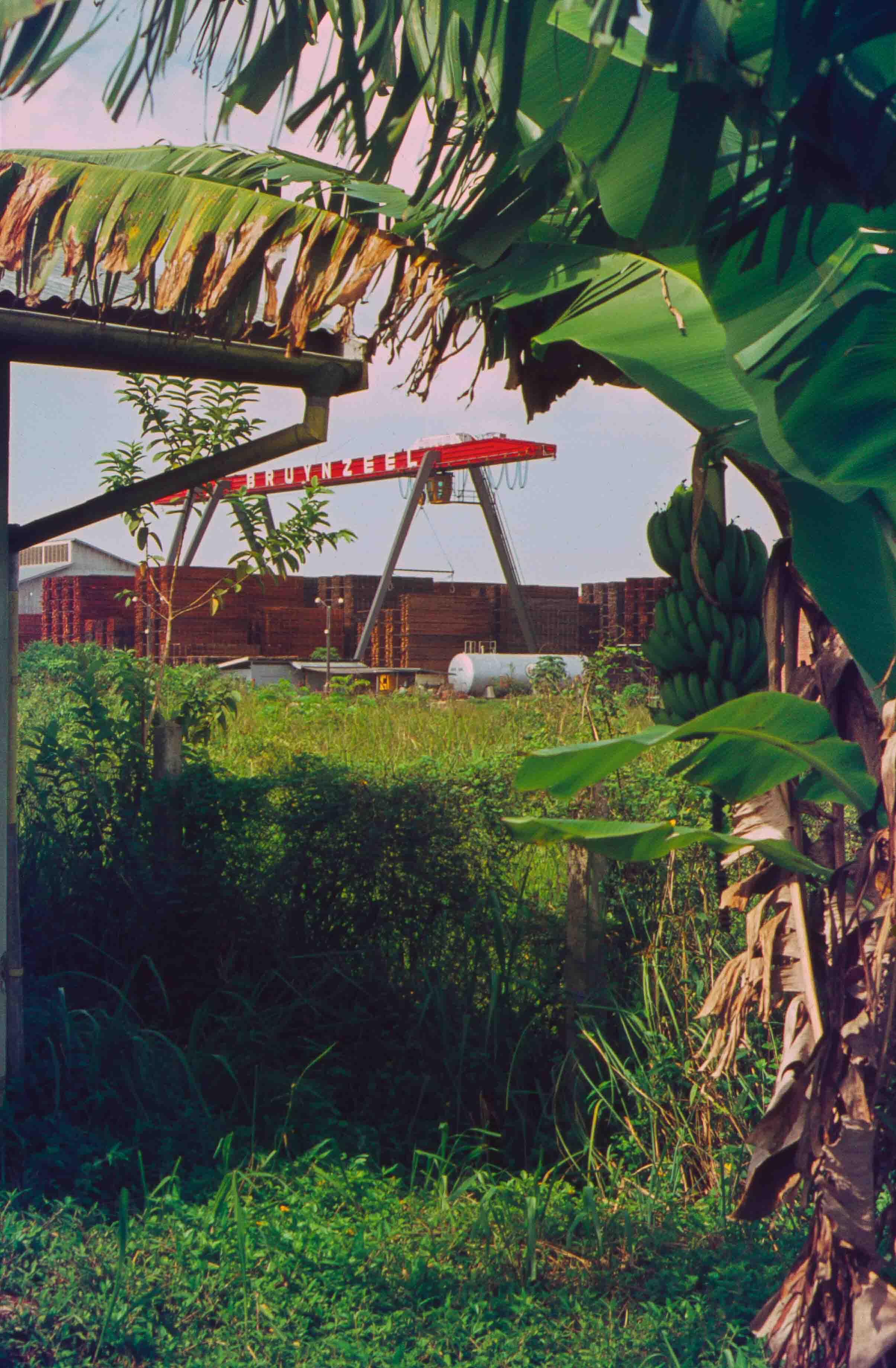 561. Suriname