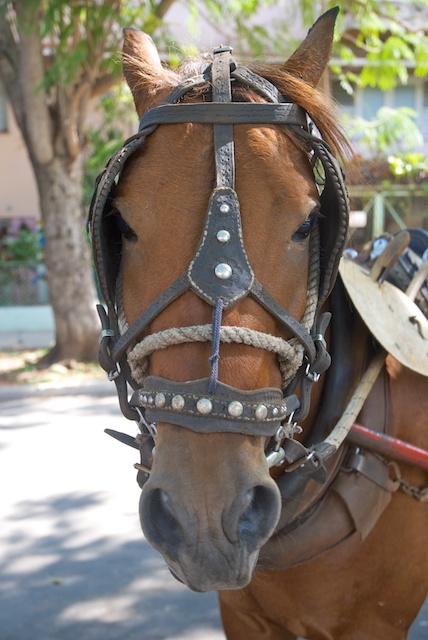 031. Paardenhoofd
