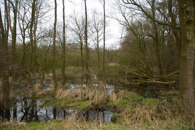 11. Mangrove
