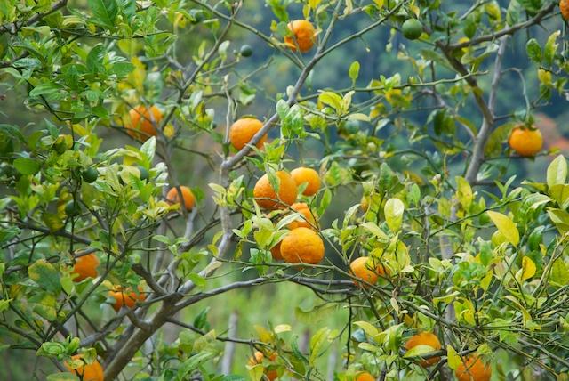 370. Sinaasappelen