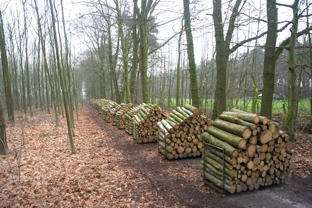 38. Hout