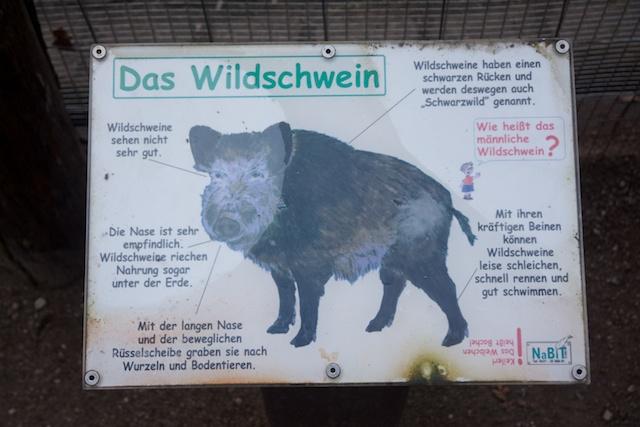 39. Wild zwijn info