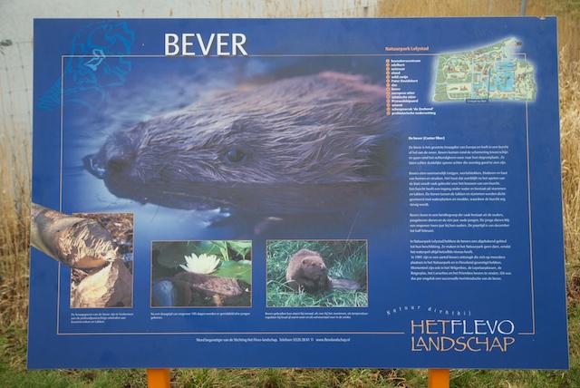 4. Bever