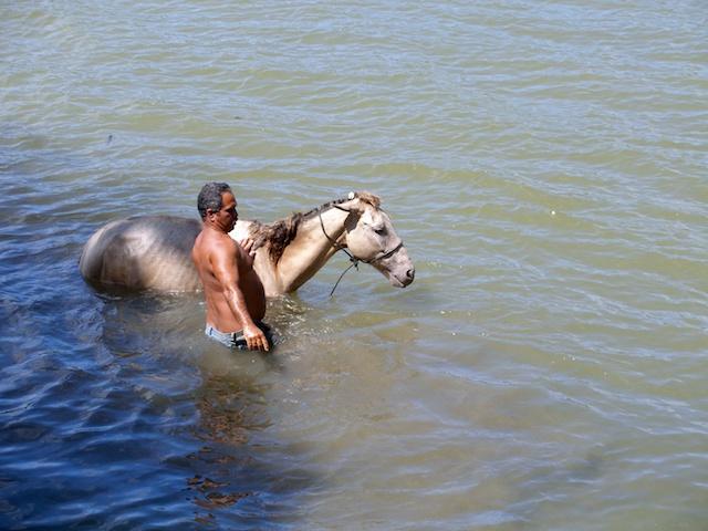 279. Paard