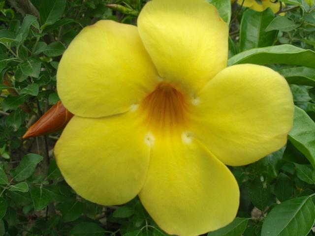 287. Gele bloem