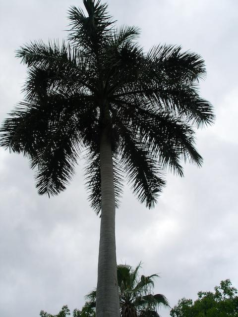 33. Palm