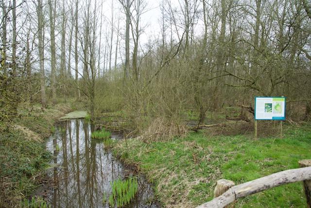 42. 't Vijverbroek