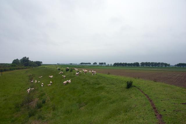 55. Grasdijk