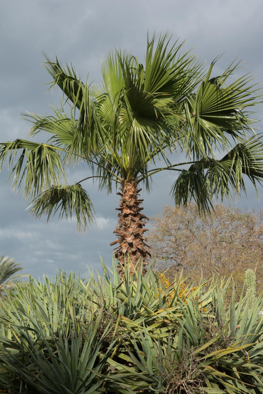 582. Palm