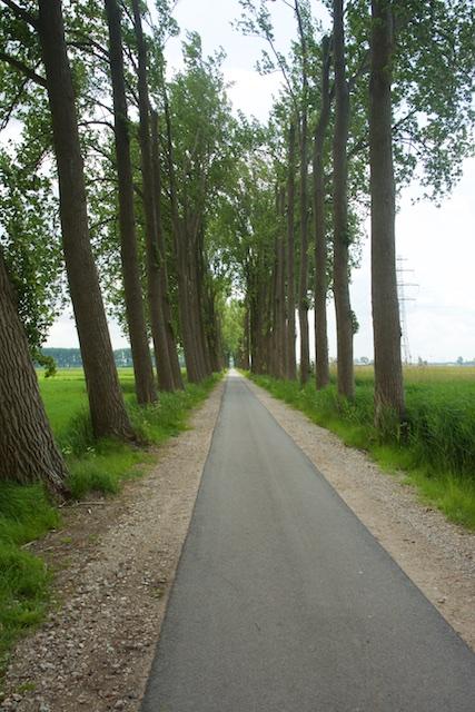 16. Bomenweg