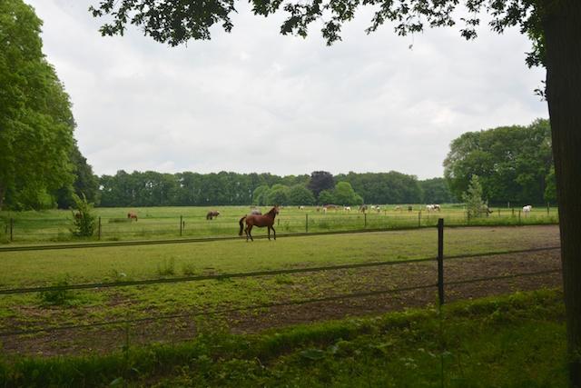 19. Paarden