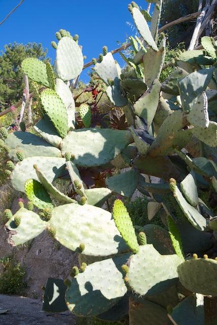253. Cactus