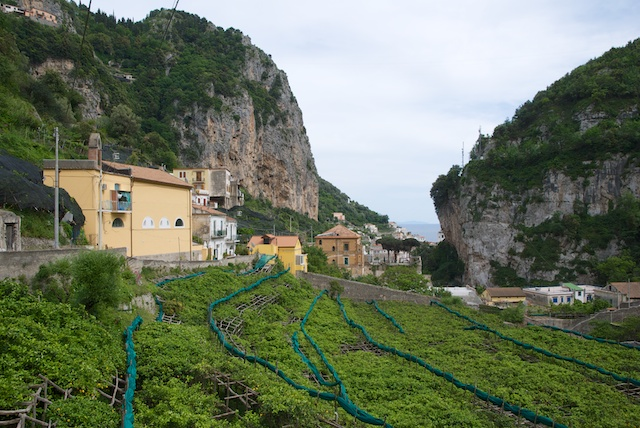 308. Amalfi