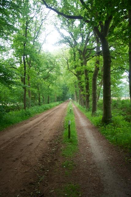 25. Noordlaarderbos