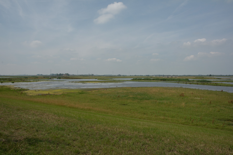 48. Biesbosch
