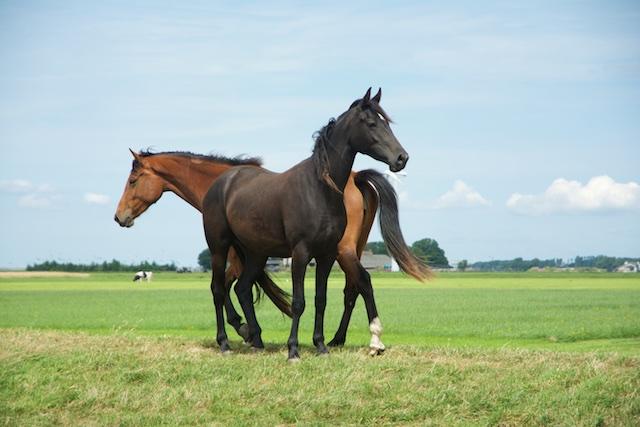 101. Paarden