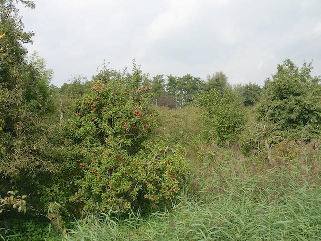 12. Boomgaard