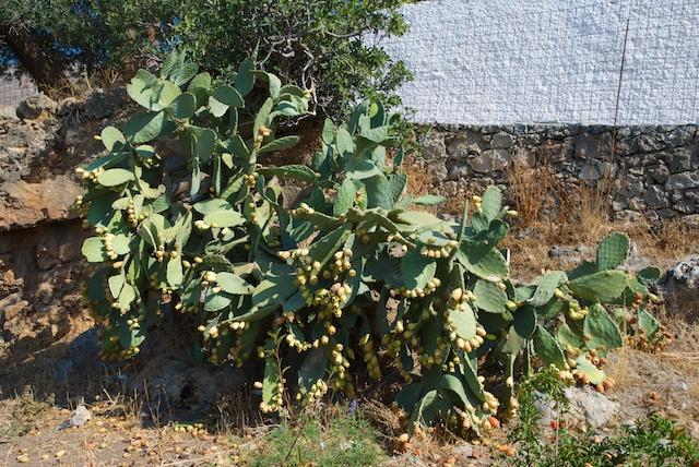 131. Cactus