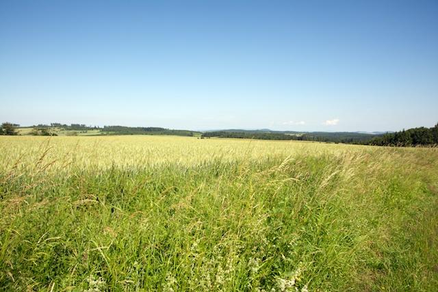 150. Landschap