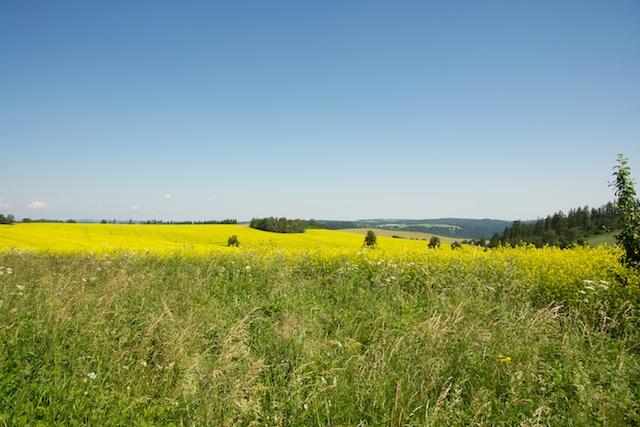 155. landschap