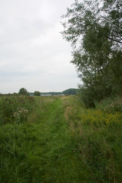 28. Grasdijk